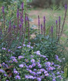 @mdbricker1500 Cottage Garden Plants, Cottage Gardens, Beautiful Flowers Garden, Different Plants, Rustic Gardens, Small Trees, Back Gardens, Purple Flowers, Garden Inspiration