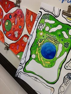 Art & Science connection: Middle school watercolor cell
