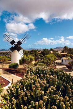VINDMILL-FUERTE VENTURA-CANERY ISLANDS,SPAIN.(ESPAÑA).