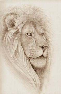 Lion drawing: would make a beautiful tatt!