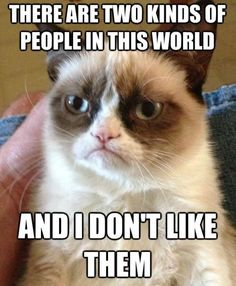 The Best Of The Grumpy Cat Meme