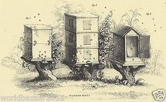 Victorian Beehive Bee Keeping Honey Hive Queen Swarm Wax Apiary Honeycomb Print | eBay