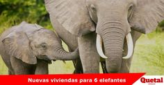 Elefantes de Suazilandia llegaran a el Zoológico y Acuario Henry Doorly de Omaha Lee la nota completa: www.quetal.us/?p=4214