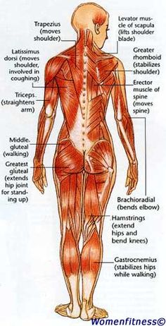 Women Strength Training Exercise: Muscle Map