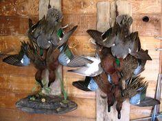 dead mount duck taxidermy
