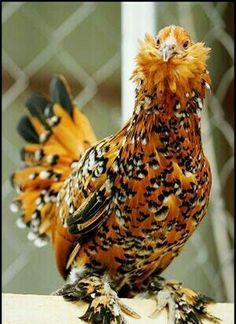 looks like a halloween chicken