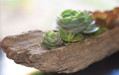 driftwood + other timber + drill holes + succulents