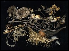 Nesting 9, Still Life - Scanner Photography By Ellen Hoverkamp