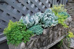 SUMMER succulent garden