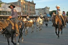 Texas has a rich history and tradition surrounding the cattle drives of the 19th century. Pictured is the Chisholm Trail Cattle Drive in Georgetown, Texas.