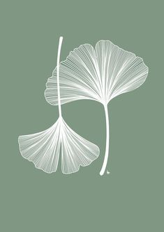 Gingko Leaves Gingko Leaves Fine line botanical drawingYou can find Botanical drawings and more on our website.Gingko Leaves Gingko Leaves Fine line botanical drawing Illustration Blume, Botanical Illustration, Motif Floral, Arte Floral, Floral Logo, Botanical Drawings, Botanical Art, Botanical Line Drawing, Botanical Gardens
