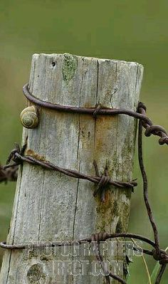3 Smart Tips AND Tricks: Backyard Fence Vines Modern Fence Design In Nigeria.Wooden Fence Posts 5 X 3 Modern Fence Post Lights.Wooden Fence Posts 5 X Country Fences, Rustic Fence, Farm Fence, Horse Fence, Pallet Fence, Fence Gate, Fence Panels, Fence Landscaping, Backyard Fences