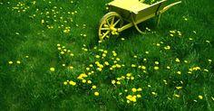 Cómo eliminar las malas hierbas con un producto casero