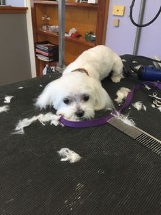 Palm Bay - Self-service dog wash, or groomer. Rated 5 stars on YP. Share your own tips, photos and more- tell us what you think of this business!