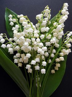 Convallaria Majalis 'Lily of the Valley' by May Lis Birchall❤️