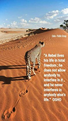 A rebel lives his life in total freedom. He does not allow anybody to interfere in it,he never interferes in anybody else's life. - osho