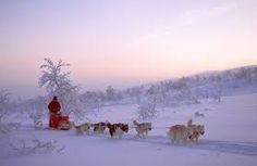 Dog Sledding in Tromso, Norway Tromso, Atlantic Road Norway, Norway Winter, Norway Viking, Cruise Europe, Seen, Lofoten, Iceland Travel, Arctic Circle