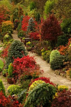 Path through the autumn upper garden of this beautiful English 'garden for all seasons'. Winner of Daily Mail National Garden Competition 2007. Winner of Walsall in Bloom 2006 ❤❦♪♫
