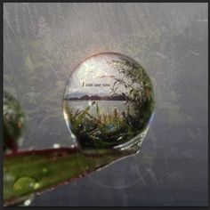 This is a picture of my backyard in Chicago blended with a picture off the web that was really interesting- the drop of water on a leaf. I then put the secret message inside the crystal drop.