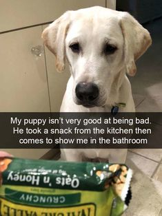I can't stop laughing at this dog who basically confessed (via imgur/AnAllusionOfADelusionFromAnIllusion)
