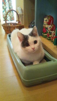 #neko #cat (via yurala1)