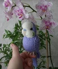 Image result for budgie knit pattern