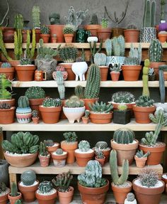 Cactus y Suculentas Cacti And Succulents, Planting Succulents, Garden Plants, Indoor Plants, Planting Flowers, Nature Plants, Indoor Outdoor, Cactus Decor, Plant Decor