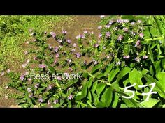 Bees at Work — A Minute in the Garden 57 from A Gardener's Notebook [Video] (1:00)    A Gardener's Notebook