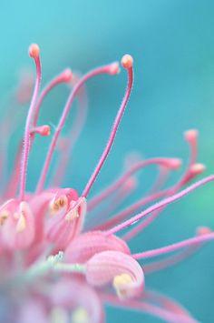 #macro, #floral
