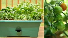 Vegetable Container Gardens - Our Ohio