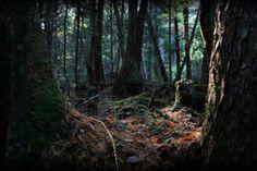 Hundreds Have Taken Their Lives in Japan's 'Suicide Forest'