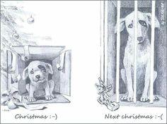 Tiere sind keine Geschenke
