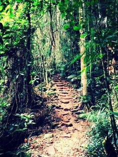 Scenery on the way up Mt Warning
