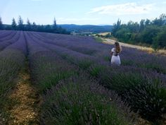 A road trip through France - camping and road tripping - beautiful lavender fields in the Provence landscape Lavender Fields, She Likes, Provence, Road Trip, Country Roads, Camping, Italy, France, Vacation
