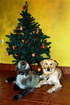 Cuper y Adur, sus primeras Navidades hace muchos años...