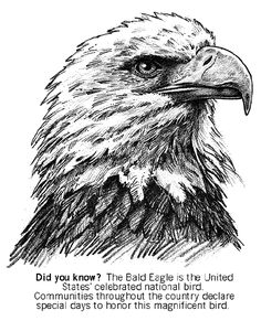 Bald Eagle Coloring Project Free Coloring Pages For Kids