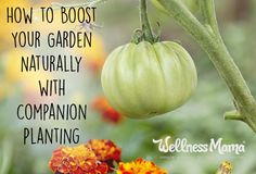 How to Grow a Better Garden with Companion Planting