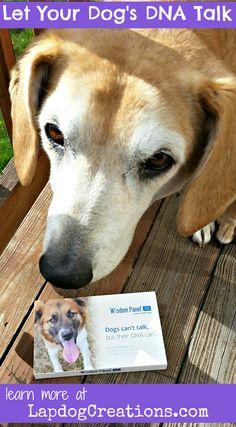 Let Your Dog's DNA Talk with Wisdom Panel - Sophie's DNA revealed a big secret! #sponsored Dog Mom   Life with Dogs   Dog Products   Rescue Dog