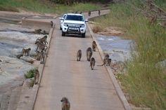 Kruger National Parc