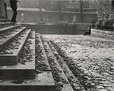 Vert Galant on a Fall Afternoon, Paris/  André Kertész  /      Date:      1963, printed ca. 1978