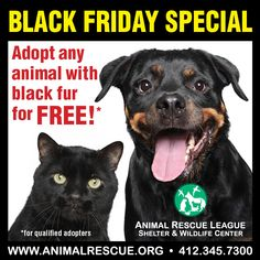 #Pittsburg #Pennsylvania !! This Friday 11-29-13 only: Adoption fees are waived for any animal with black fur, so it's definitely time to adopt! Qualified adopters can stop in Friday from 11am-4:30pm (regular screening process still applies). For more information, please contact our adoption department: 412-345-7300 ext 215