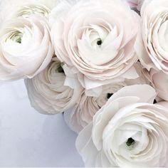 Sunday fresh flowers stuff by @leiasfez on...