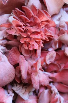 Pink Oyster mushrooms. These are found in food markets around the world now.