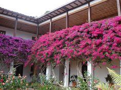 Villa de Leyva by shari Bougainvillea, Perfect World, Beautiful Places, Plants, Favorite Things, Hotels, Garden, Spaces, Ideas