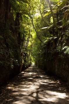 Kakahi, New Zealand.main rd and glow worms live on the walls. Glow Worms, New Zealand, Maine, Beautiful Places, Dads, Country Roads, Photos, Beauty, Pictures