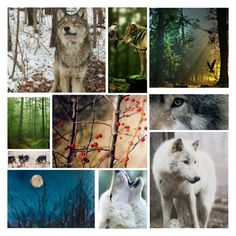 My Friend The Wolf By Lindacsanfelice On Polyvore