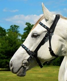 Cob SizeENGLISH BRIDLE Bling Beta Biothane by nar0402 on Etsy