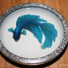 3-D Painting Halfmoon Betta Fish Resin Water Riusuke Fukahori