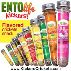 Mini-Kikers are fun, healthy & taste great. Over 100 crickets per tube. GREAT STOCKING STUFFER!