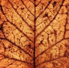 Afbeeldingsresultaat voor textuur